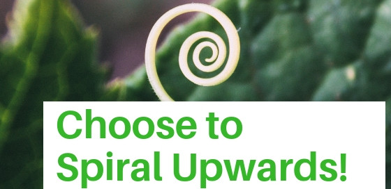 Choose to spiral upwards: A new plant spirals up out of its leaves.